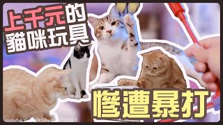 【魚乾】上千元的貓咪玩具,慘遭妹子暴打!
