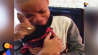Boy Has BEST Reaction to Dog Adoption | The Dodo