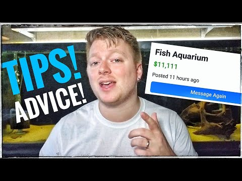 Buying Used Aquariums! My Tips, Tricks And Fails!