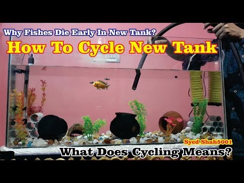 How to Cycle New Tank | Fishless Cycling for a Beginner | What's mean fish tank cycling