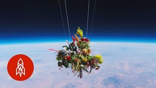 Launching Flowers Into Outer Space