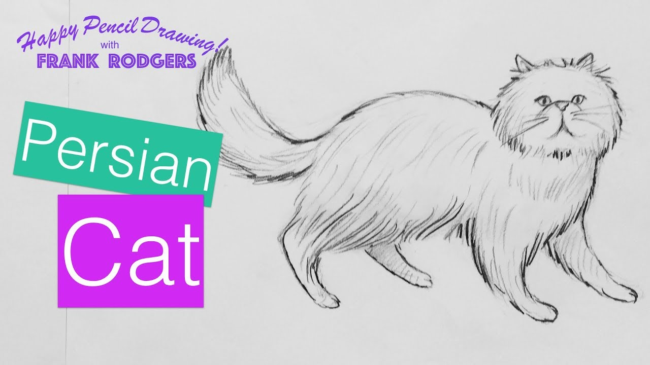 How to draw a pencil sketch of a persian cat happy drawing with frank rodgers