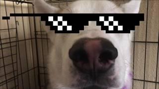 Dumb dog...
