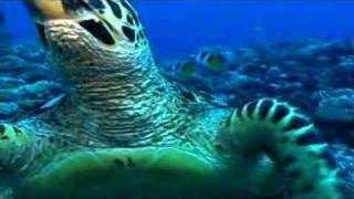 Sea Turtle bites camera then winks!