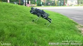 ԱՌԱՆՑ ՄԵԿՆԱԲԱՆՈՒԹՅԱՆ  Չինական ռոբոտ շունը