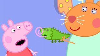 Peppa Pig Full Episodes | Dr Hamster's Tortoise | Kids Videos