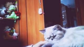 Как Коты Относятся К Спиннерам?