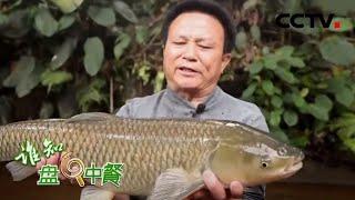 《谁知盘中餐》 20200515 古法加新招 养出致富鱼|CCTV农业