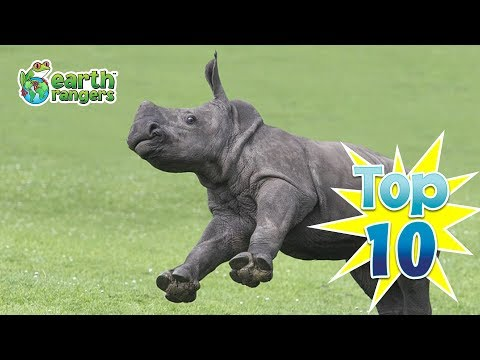 Top Ten Cutest African Animal Babies