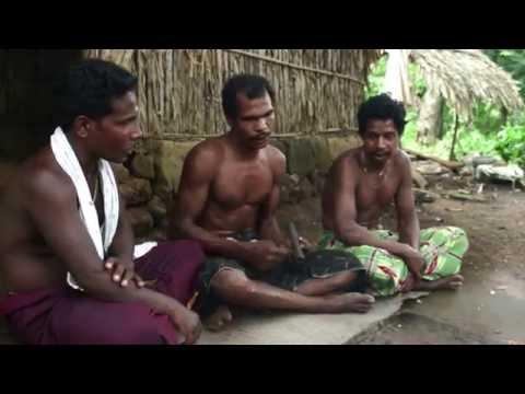 ചാറ്റീം പാടീം വാഴുന്നോർ  | Chatim Padim Vazhunnor | Cultural life of kaani tribes