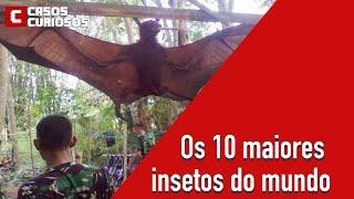Gambar cover Os 10 maiores insetos do mundo - Casos Curiosos
