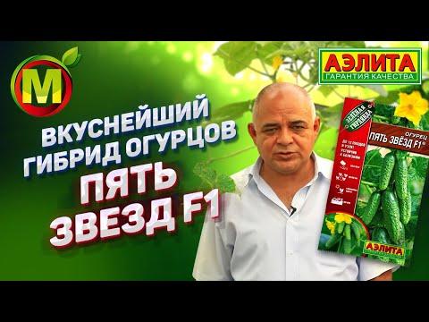 🥒 ВКУСНЕЙШИЙ гибрид ОГУРЦОВ для посадки в 2019. Гибрид Пять Звезд F1