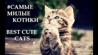 Лучшие приколы про котиков | Подборка смешных кошек и котят #8
