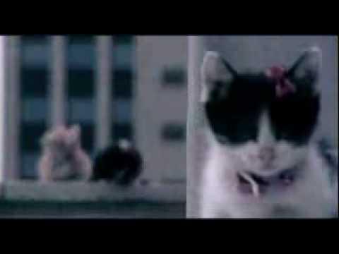 acting cats - Korean Singer M/V