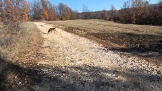 1 Декабря 2013 Охота в Болгарии Aimpoint Sauer Norma Peltor 3M Бялка