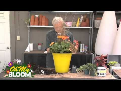 Design Ideas for a Full Sun Container YouTube