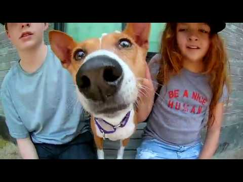 New York City Basenji Gathering - 1 July 2018 - Hot Day With Dash and Makena
