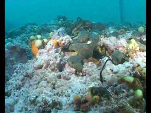 le tegnue di Chioggia, un ambiente subacqueo veramente sorprendente