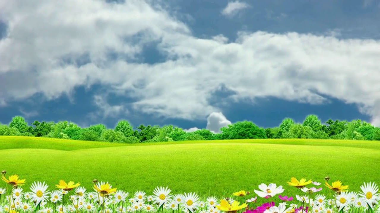 Natural Flower Background Video Grass Nature With Flowers Bsmotion Youtube