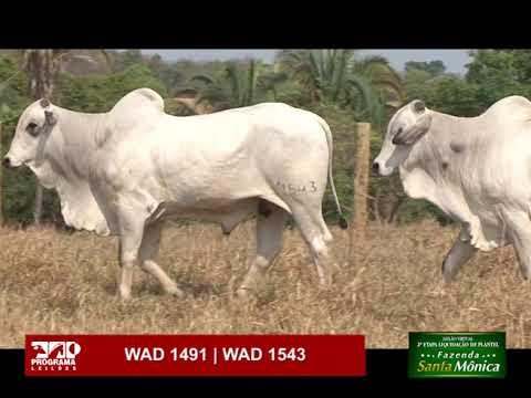 LOTE 62 - WAD 1491 | WAD 1543
