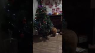 Новогодняя елка.И все таки елки ставят только для котов))