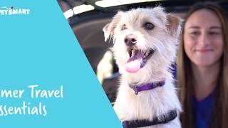 10 Road Trip Essentials for Traveling with Your Dog | PetSmart