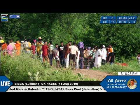 SHIFT 3 🔴 BILGA (Ludhiana) 🔴 OX RACES - ਬਲਦਾਂ ਦੀਆਂ ਦੌੜਾਂ [11th-Aug-2019]