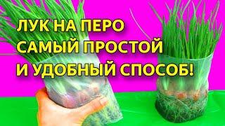 Лук на зелень и перо. ЛУЧШИЙ СПОСОБ! Выращивание зеленого лука без земли в пакете.