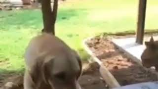 Dog : My Bad..  Funny Cat and dog video