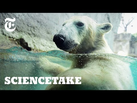 See Life Through the Eyes of a Polar Bear  ScienceTake