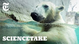See Life Through the Eyes of a Polar Bear | ScienceTake
