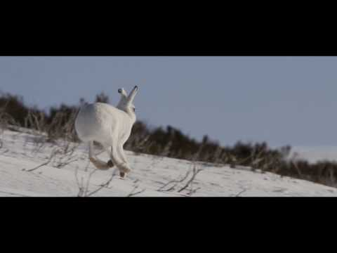 Sullivan's Winter - An Off-Peak Exploration Of Wild Scotland (Full Film)