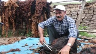 Koyunlarda da temizlik zamani Video
