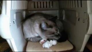 ねこカフェ「あすたまにゃ〜にゃ」はWEB上の保護猫カフェです。 それぞ...