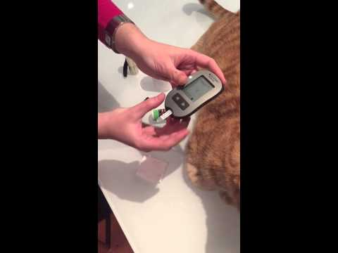 Feline diabetes: how to test your cat's blood glucose level