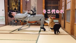 パパの運動に付き合わされる猫が羨ましい柴犬 Work out with my cat