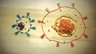 видео Стадии развития ВИЧ-инфекции
