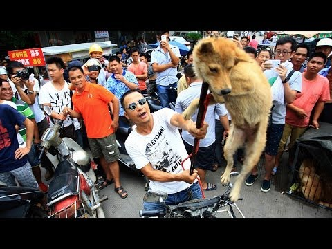 Animal Rights Activists Protest China