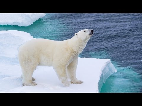 POLAR BEAR ENCOUNTER! - Arctic Day 10