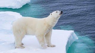 POLAR BEAR ENCOUNTER! - Arctic Day 10