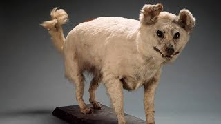 10 Extinct Dog Breeds