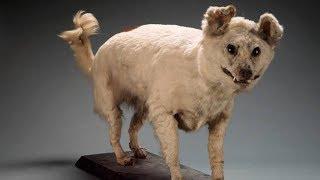 List Of Extinct Dog Breeds