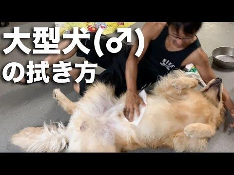 全く参考にならない大型犬の拭き方