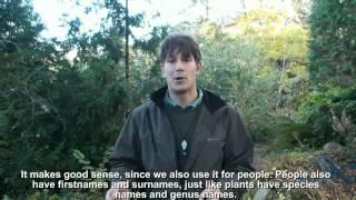 Botanik for farmaceuter - trailer