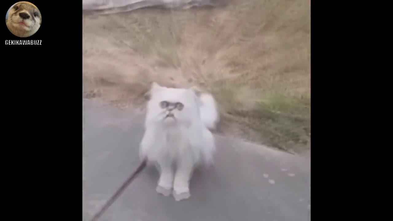 変な顔の猫に怯えるDQNアメリカ人