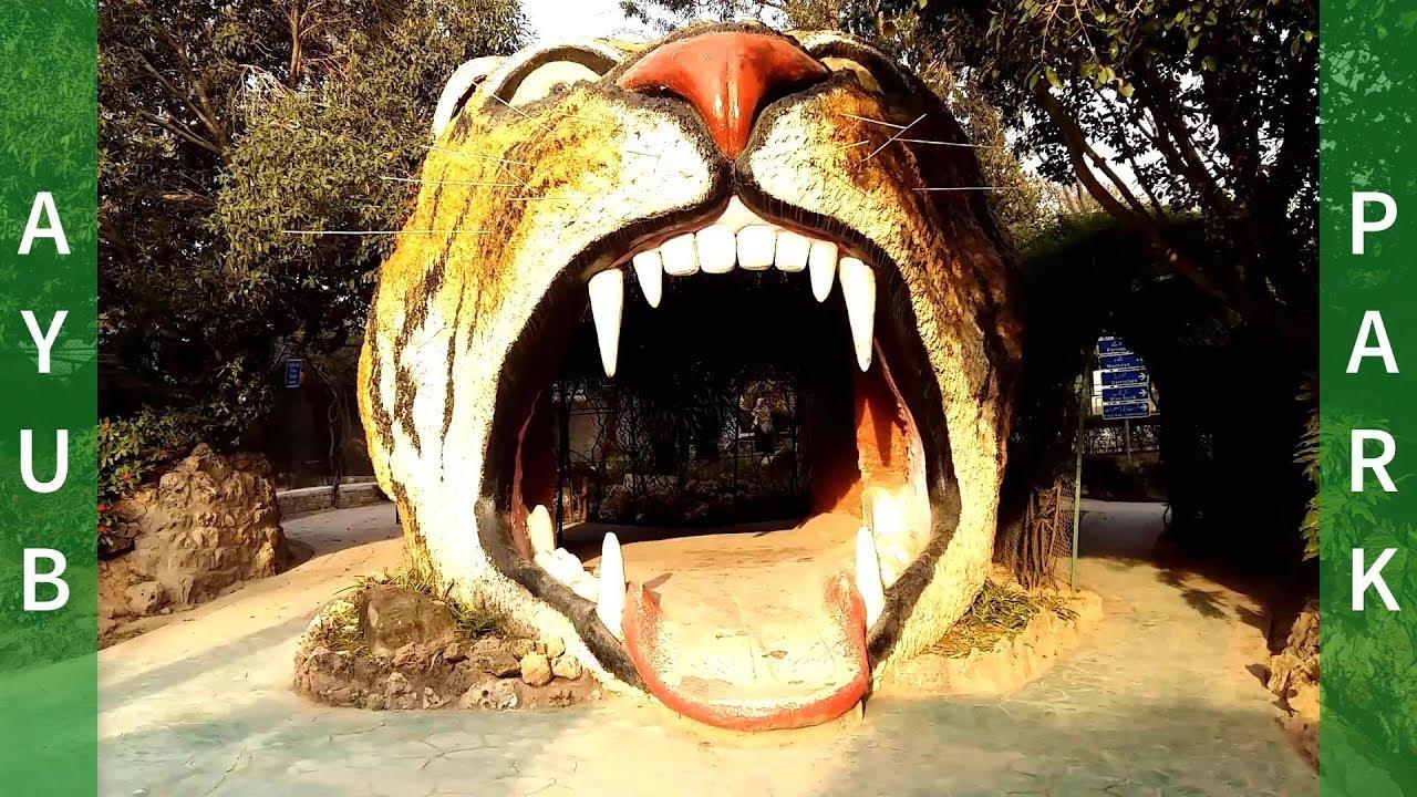 Download Ayub National Park Rawalpindi, Pakistan   Jungle World