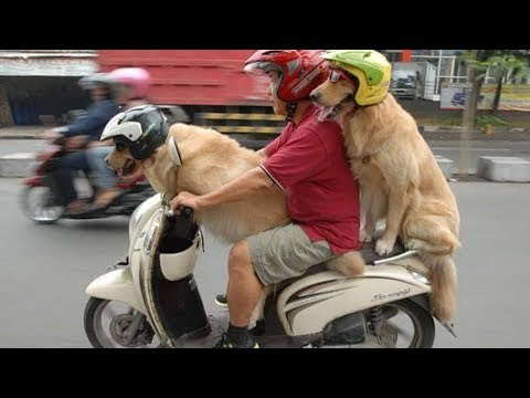 Dog helps owner - dog play with owner | WORLD PET TV