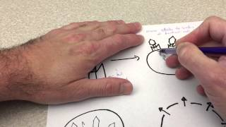 bacteriophage lytic cycle