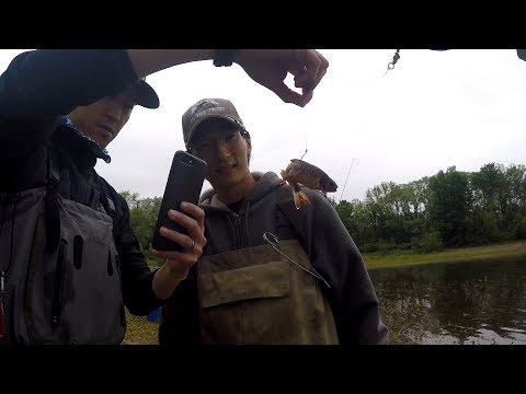 Catching BAITFISH! Then LIVE-LINING them for BIGGER FISH! ft. My Asian Friends (Clinton, NJ)