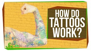 How Tattoos Really Work... At Least in Mice